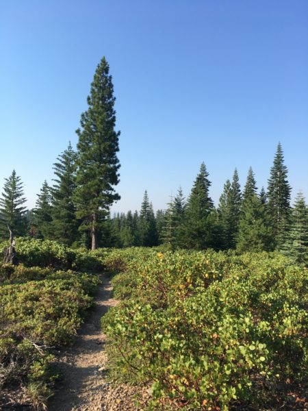 PCT NorCal Day 9: Getting to Chester